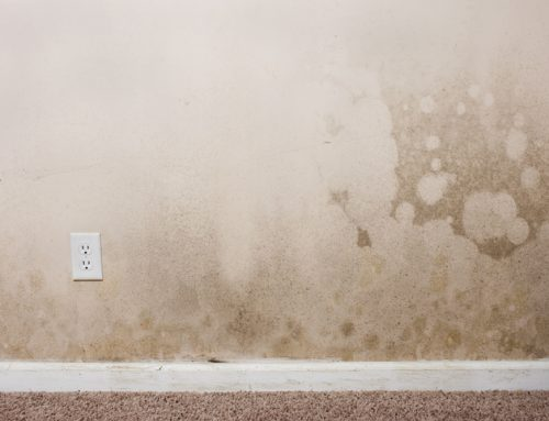 How To Get Rid of Mold on Drywall